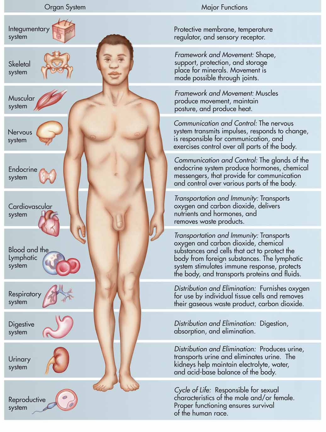 what are the major organ systems of the body