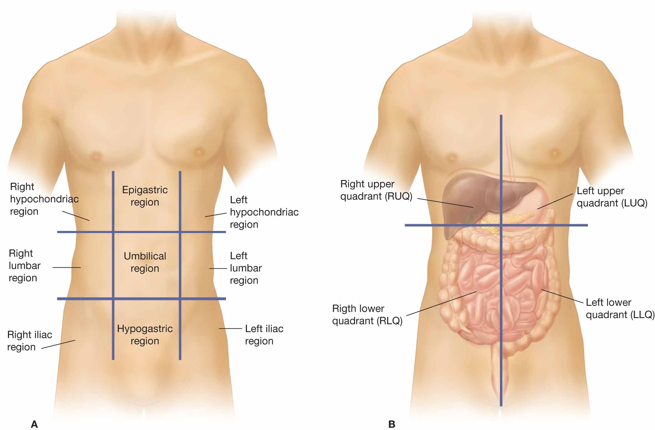 Posterior body cavities further Anatomical Directional Terms Table additionally Fap Bones And Joints together with Harmones Cology Ppt Finalppt1 together with Spinal Cavity. on diagram of organs the major body cavities