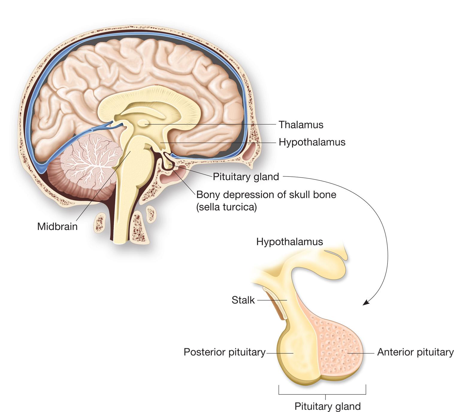 https://biology-forums.com/gallery/14755_28_08_12_1_42_27_82361629.jpeg