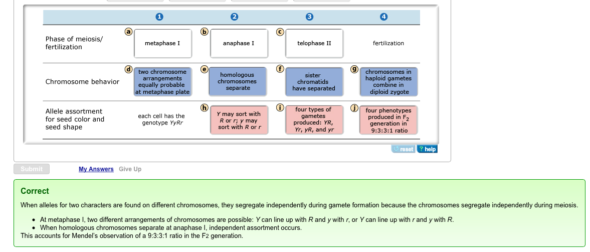 3 identify the four possible gametes produced by the following individuals Genetics problem set independent assortment problems be produced genotypes possible gametes a method used to identify individuals by locating unique.