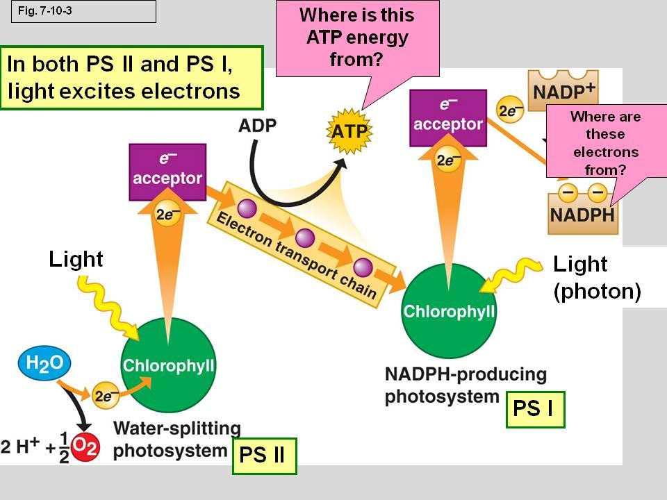 phtosynthesis quiz