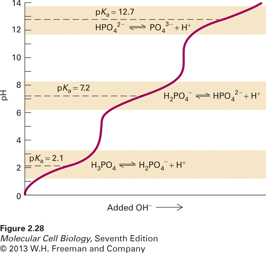 The titration curve of phosphoric acid (H3PO4), a common buffer in