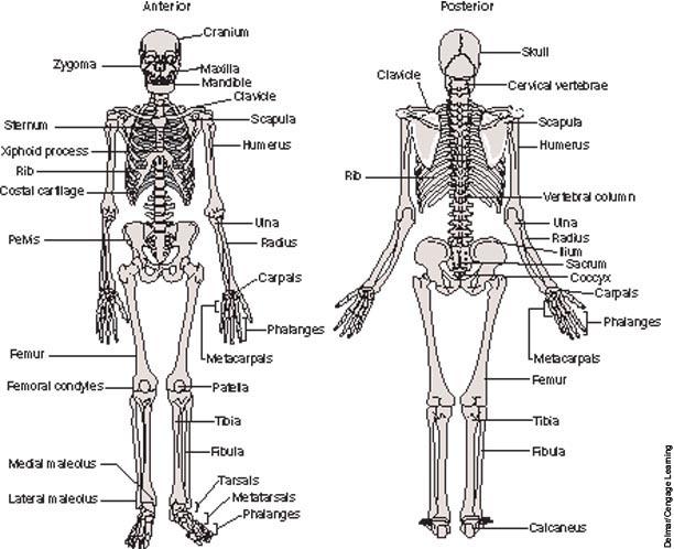 search results for  u201cskeleton labeled 27 u201d  u2013 calendar 2015