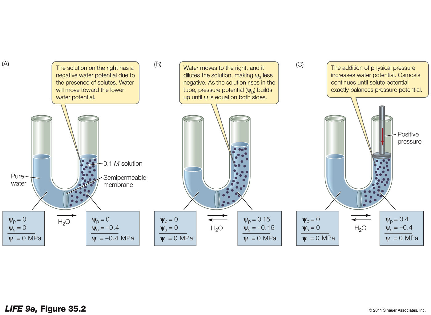 Water Potential Related Keywords & Suggestions - Water Potential ...