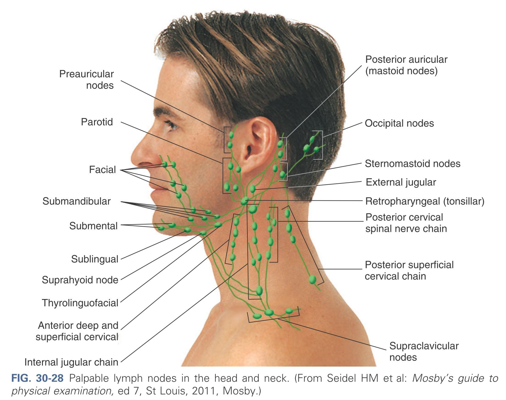 how to feel for swollen lymph nodes in the neck