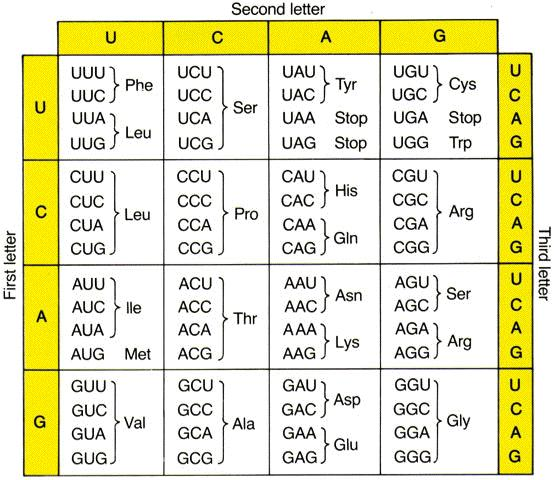Amino Acid Sequence Chart  Images Free Download  Difference