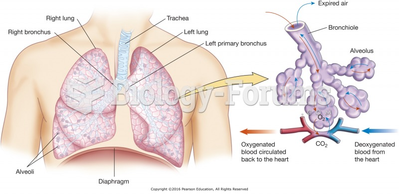 The lower respiratory tract and the process of gas exchange.