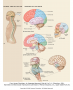 Basic anatomy of the brain.