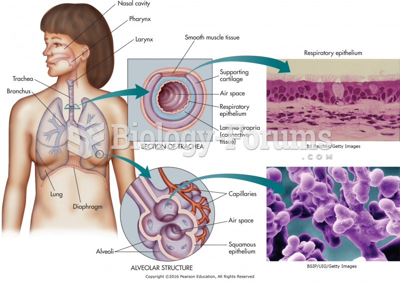 The components of the respiratory system with micrographs of the respiratory epithelium and alveoli. ...