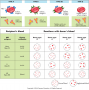 Blood types and results of donor and recipient combinations.
