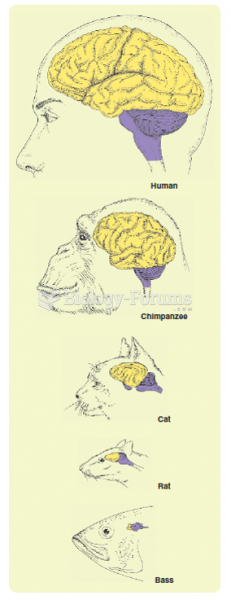 The brains of animals of different evolutionary ages—cerebrums are shown in yellow; brain stems ...