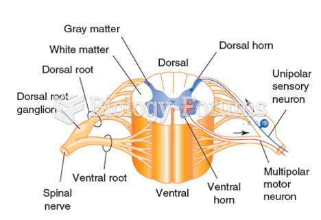 Schematic Cross Section Of Spinal Cord - Product Wiring Diagrams •