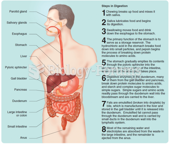 The gastrointestinal tract and the process of digestion.