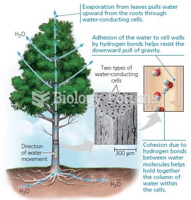 Water transport in plants.