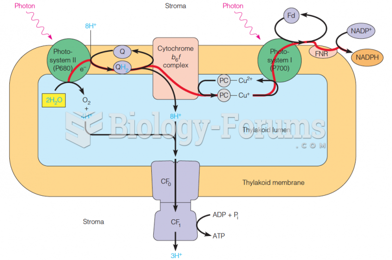 Summary view of the light reactions as they occur in the thylakoid