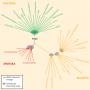 Molecular tree of life