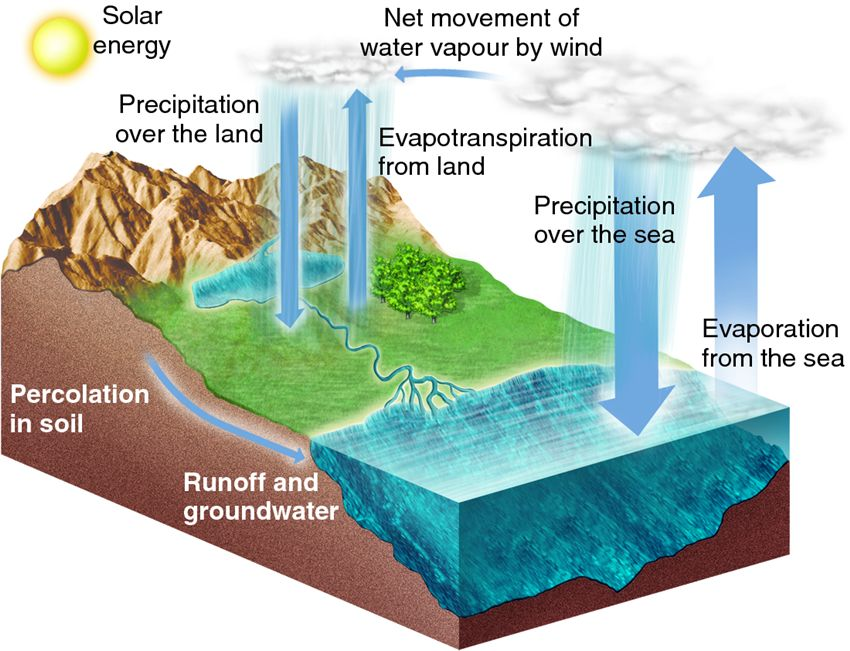 Evapotranspiration Water Cycle Drives The Water Cycle