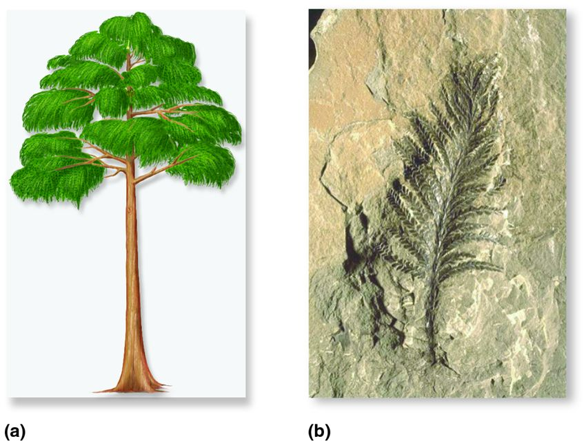 Wood first appeared in plants called progymnosperms