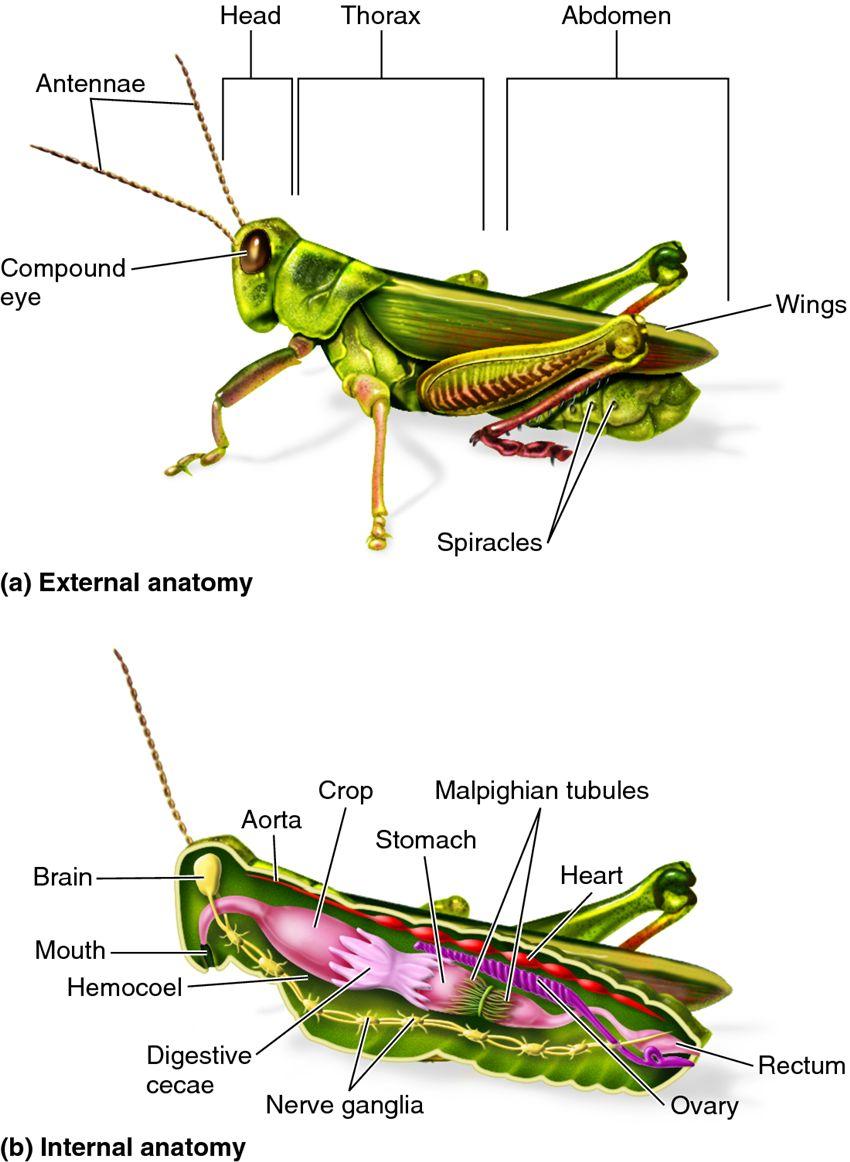 Concept Design Home: Grasshopper Carapace Pictures