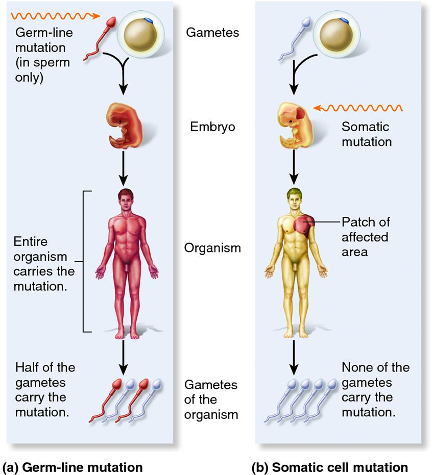 gene mutations causes types and effects Here we are going to talk about the chromosomal mutations, causes and effects on living organisms and its evolution we will also identify the types of mutations that affect chromosome synthesis.