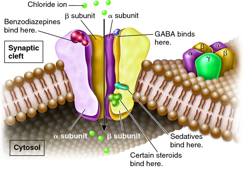 "myo inositol treatment and gaba a receptor subunit Biomed research international ""effect of myo-inositol on d dzneladze, and t kiguradze, ""myo-inositol treatment and gaba-a receptor subunit."