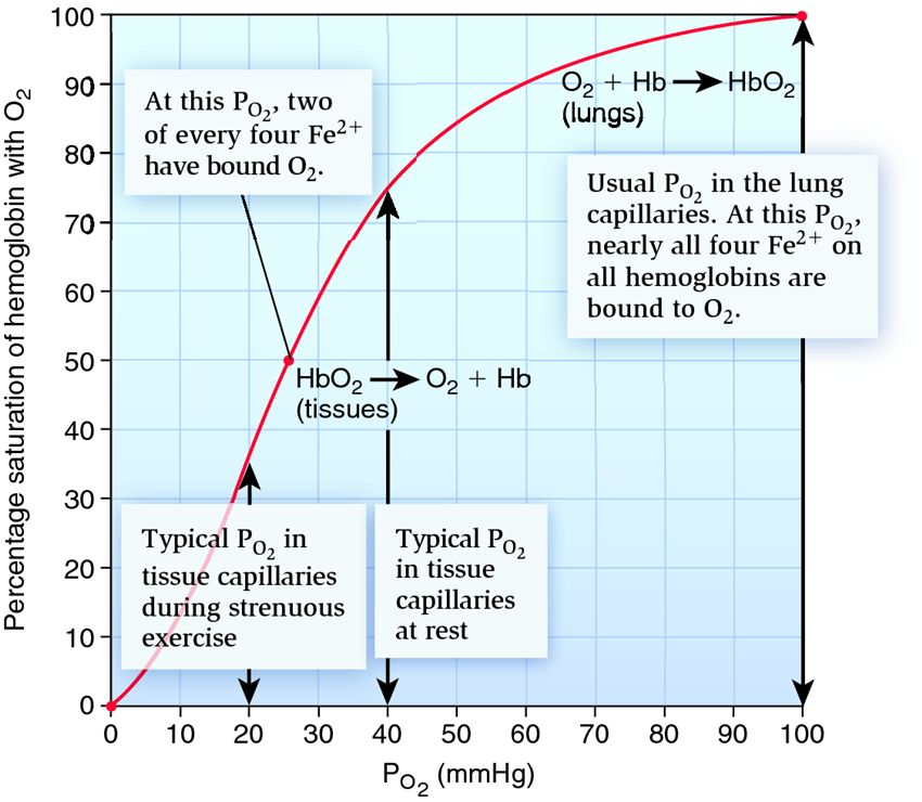 effect of ph on percent oxygen saturation of haemaglobin Of hemoglobin-oxygen saturation and erythrocyte ph in the blood of the frog, rana temporaria rufus m  ence of the bohr effect and ph-dependent changes in the.
