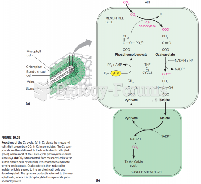 Evolution of Photosynthesis: reactions of the C4 cycles