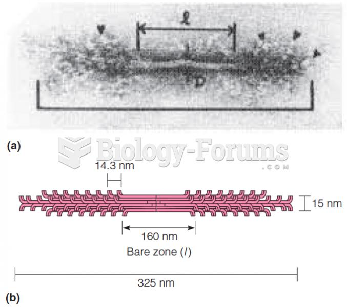 A thick filament of myosin II molecules