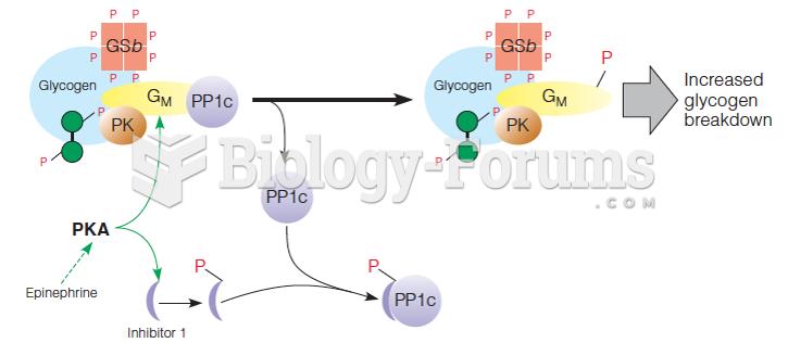Regulation of phosphoprotein phosphatase 1 (PP1) in muscle