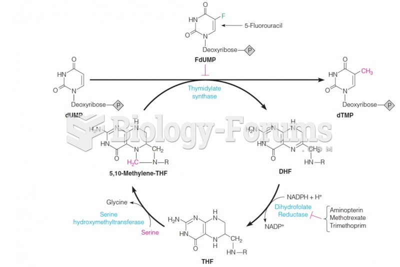 Relationship between thymidylate synthase and enzymes of tetrahydrofolate metabolism