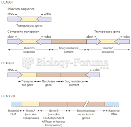 Structures of class I, class II, and class III mobile genetic elements