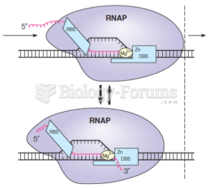 Backtracking in an elongation complex