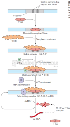 Preparation of a 5S rRNA gene for transcription