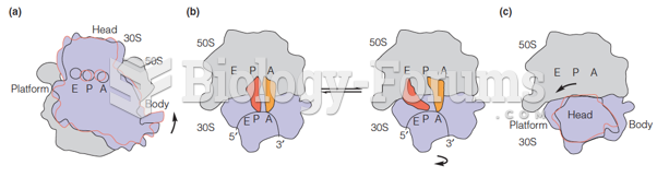 A schematic view of ribosome subunit rotational motions, based on crystal structures of ribosomes