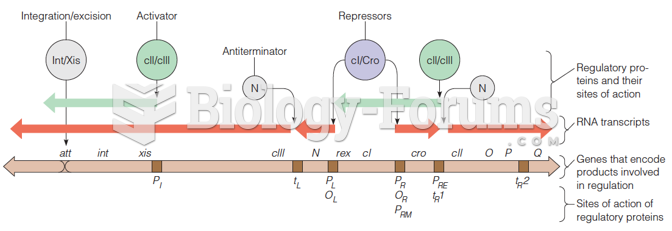 The early regulatory region of phage l