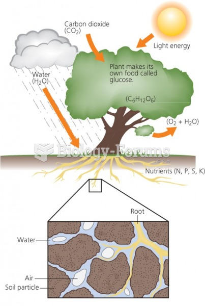 """photosynthesis of a tree """"التركيب الضوئي"""""""
