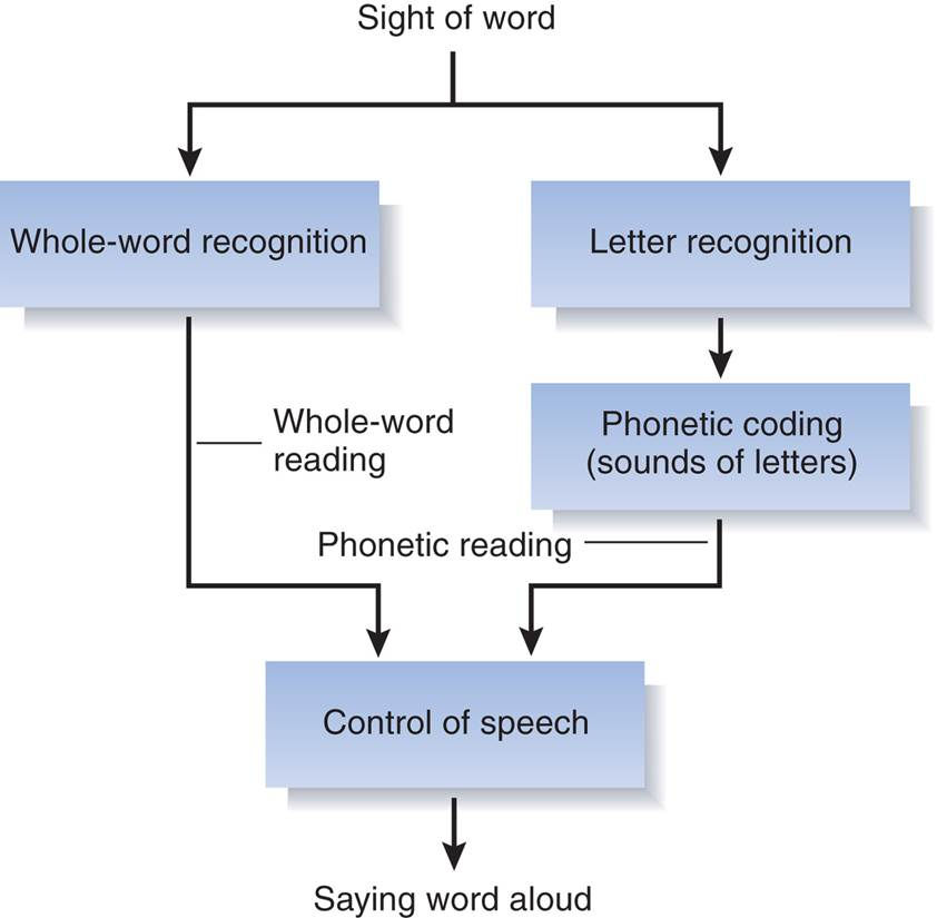 hippocampus research papers When the hippocampus is damaged, an individual cannot retain information for more than a few seconds this suggests that the hippocampus plays a research paper.