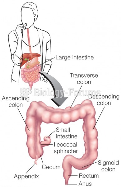 Anatomy of the Large Intestine By the time chyme reaches the large intestine, most of its nutrients