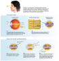 Retinal and Its Role in Vision
