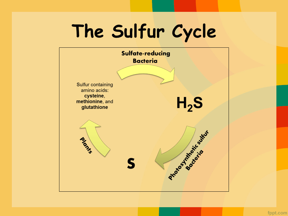 Sulfur Cycle Related Keywords - Sulfur Cycle Long Tail ...