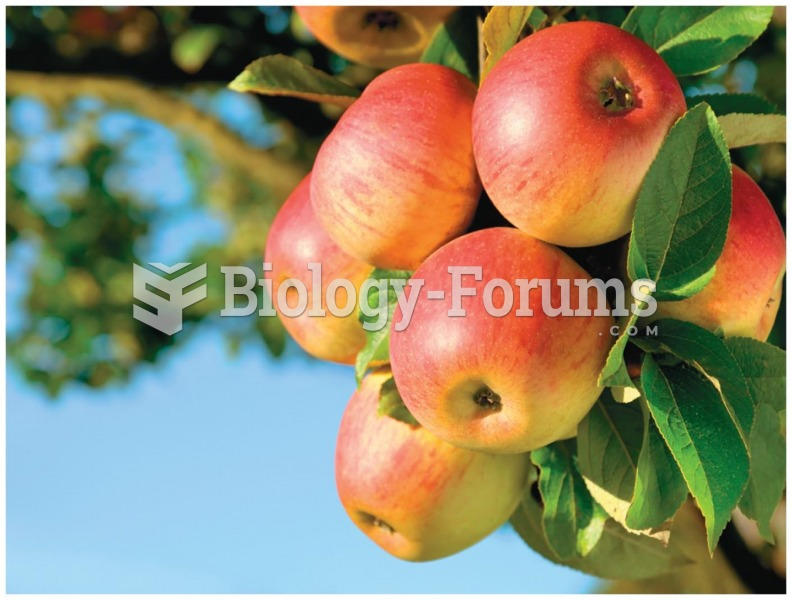 The apples of today are larger and sweeter than their ancestors, thanks to hundreds of years