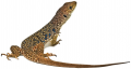 Reptiles (lizards, snakes, and turtles) often carry Salmonella