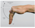 Flexion and extension of the fingers