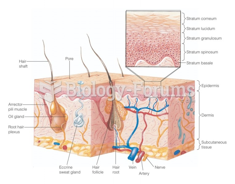 Skin structure. Three-dimensional view of the skin, subcutaneous tissue, glands, and hairs