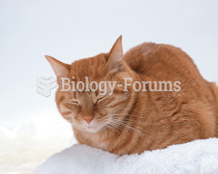 Stages of Sleep in Cats: A cat in non-REM sleep remains upright