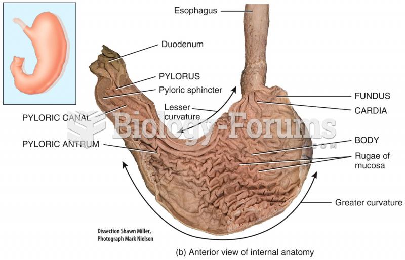 Internal Anatomy of the Stomach