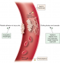 "Mechanism of Action of Anticoagulants ""آلية عمل مضادات التخثر"""