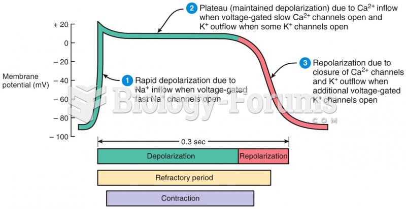 Action Potential in a Ventricular Fiber