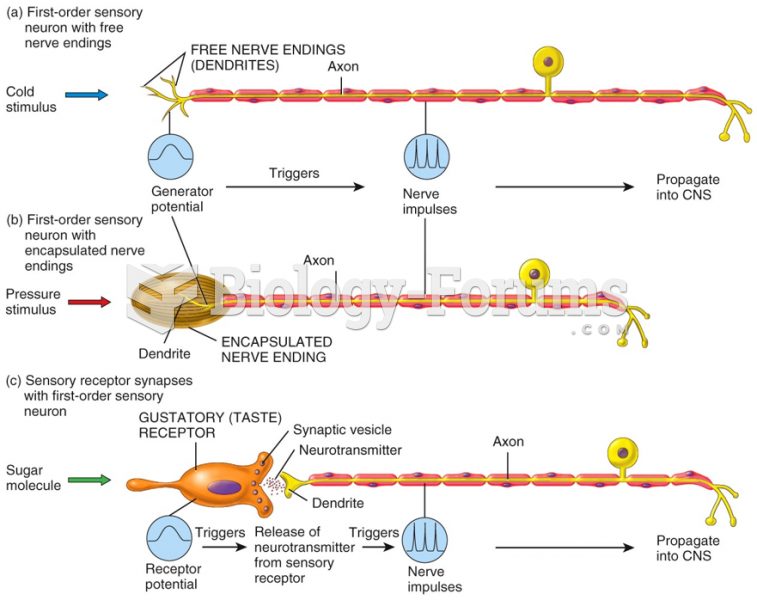 First-order sensory neuron with free nerve endings