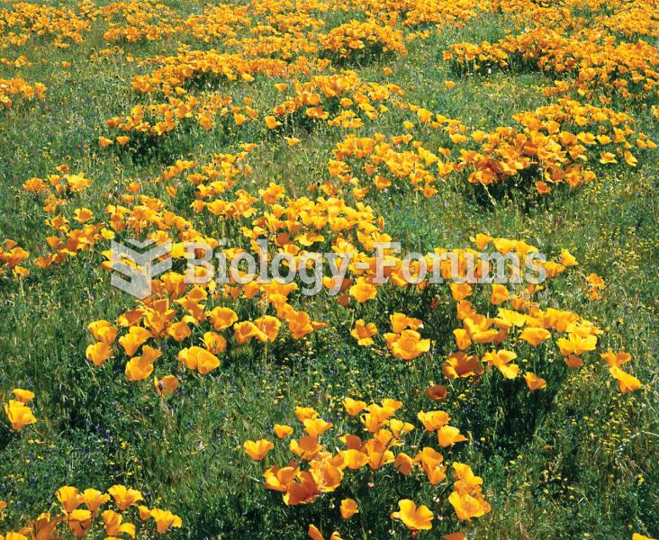 Population of California poppy plants